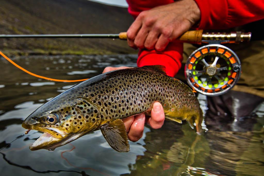 Para Los Amantes De La Pesca