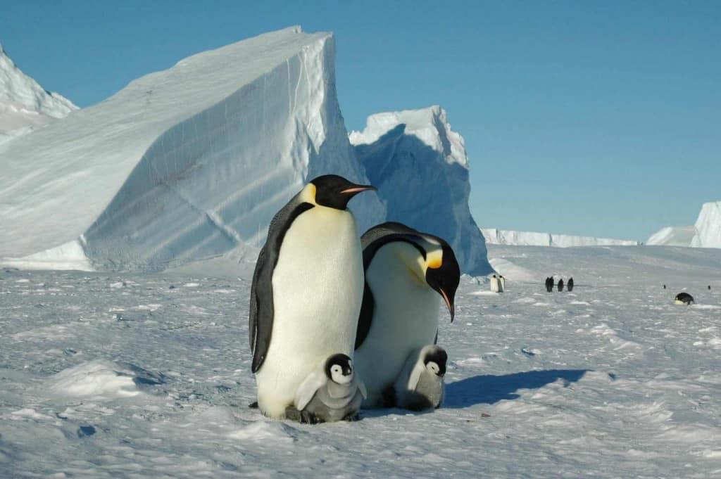 Vive una experiencia EXTREMA en el primer y único campamento ecológico de lujo en la Antártida