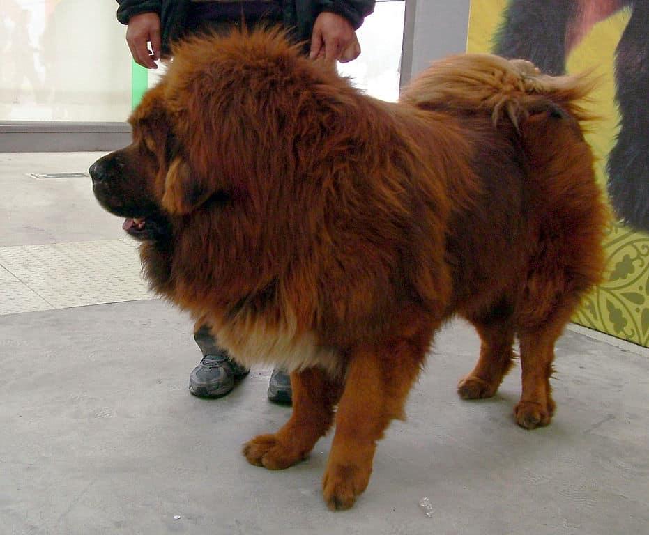 Conozca a los perros más caros del mundo