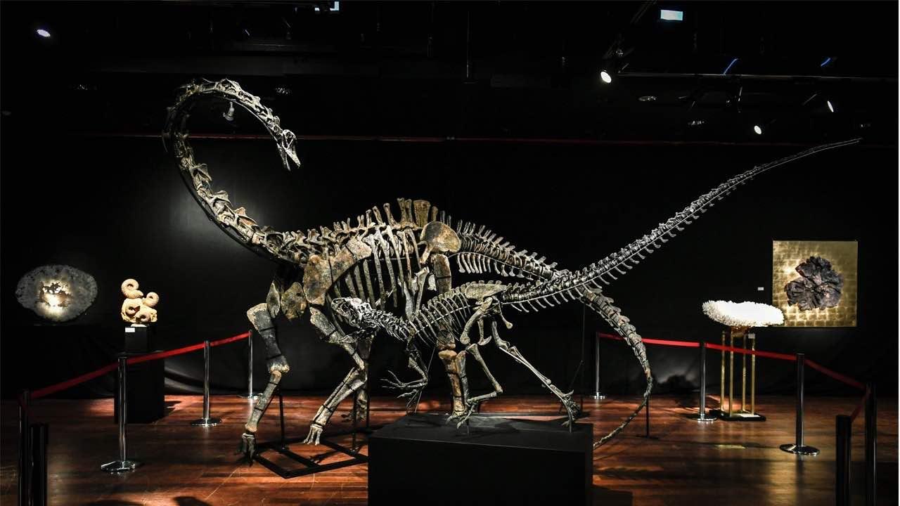 Estos dos esqueletos de dinosaurios en perfectas condiciones