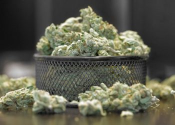 Marihuana (Cannabis)