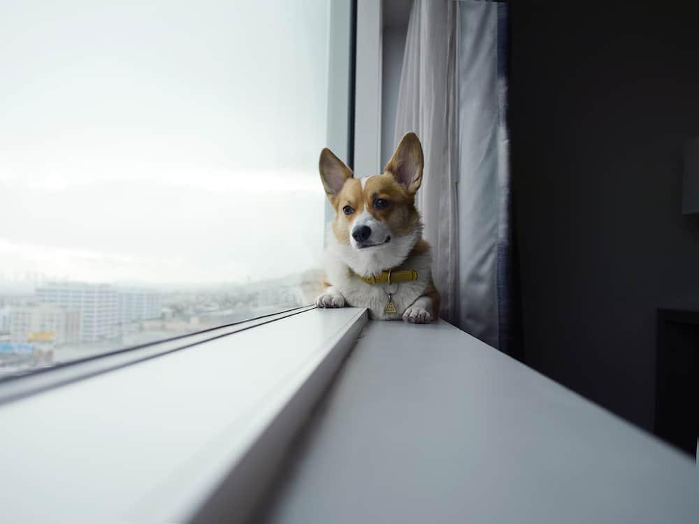 Los Ángeles es nombrada la ciudad más pet-friendly en América para viajar con mascotas