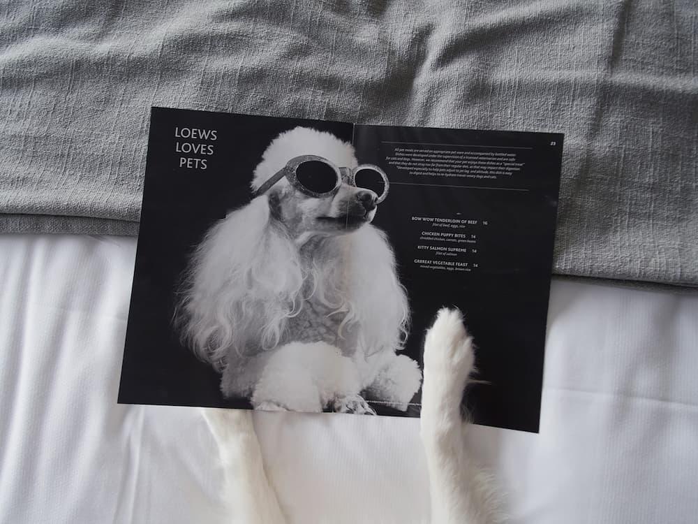 Loews Hollywood, tiene todo lo que tú mascota se sienta como en casa gracias a su programa Loews Loves Pets.