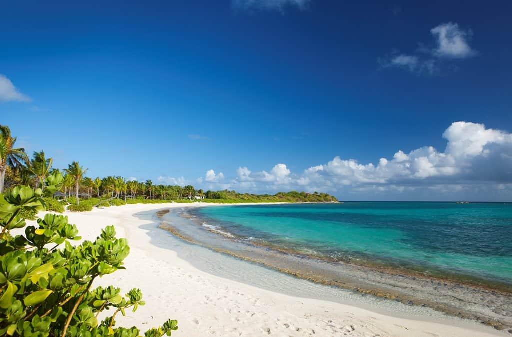 Bananaquit, en la isla privada Jumby Bay, Antigua