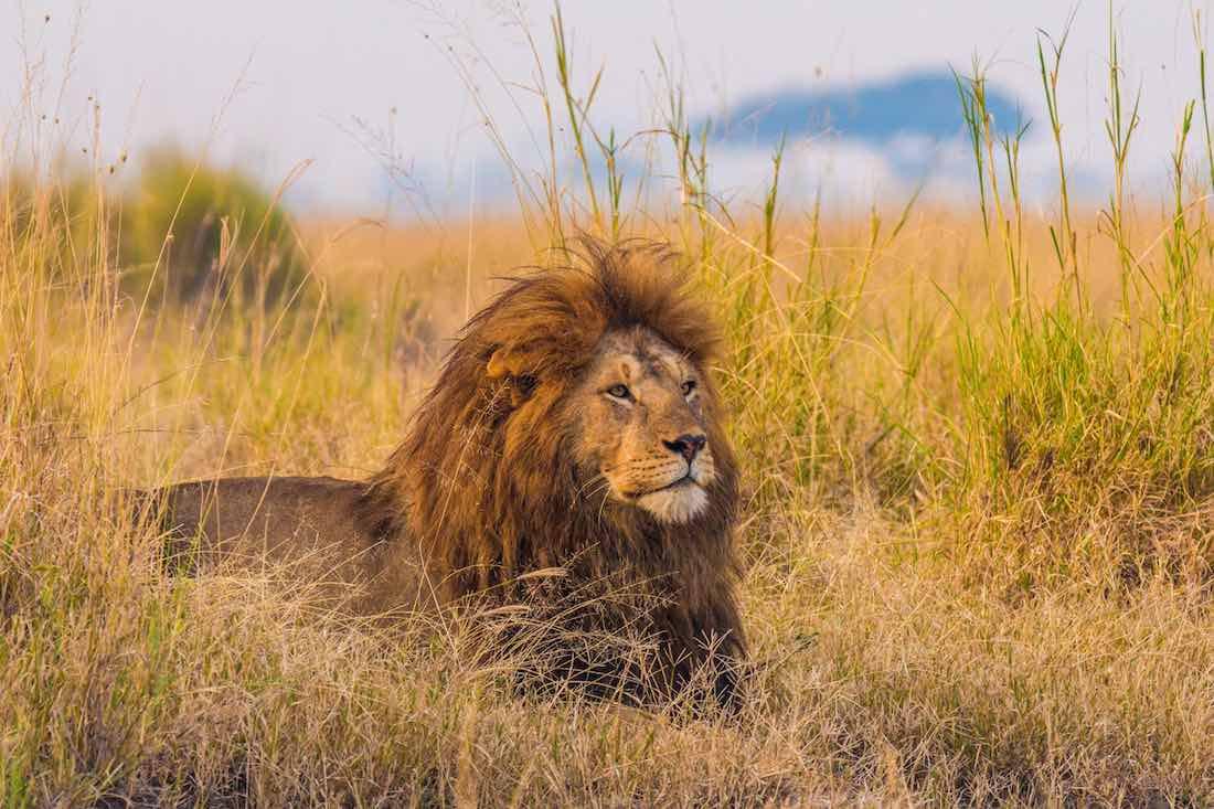Fauna: Serengeti