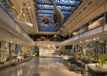 Museo de Historia Natural Los Ángeles