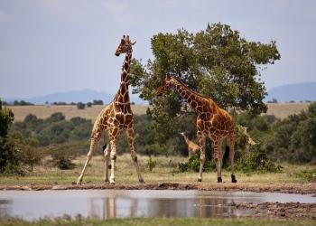 Por qué viajar a Kenia: 7 razones por las que todos quieren viajar a este hermoso país de África Oriental.