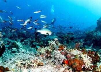 Océano con peces grandes y peces pequeños