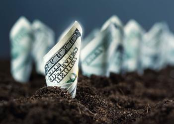 Dólares americanos crecen en el suelo