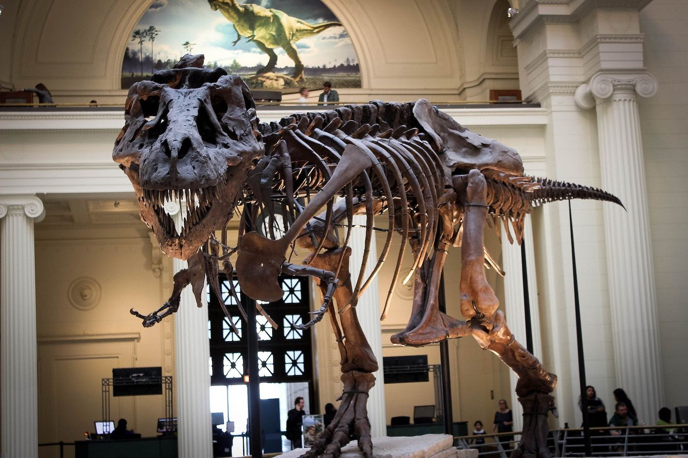 Fósiles: artículos coleccionables interesantes que puedes comprar