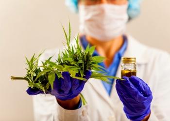 Médico ofrecer al paciente marihuana medicinal y aceite de cannabis.