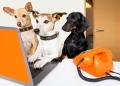 Las razas de perro más buscadas por los mexicanos en 2020