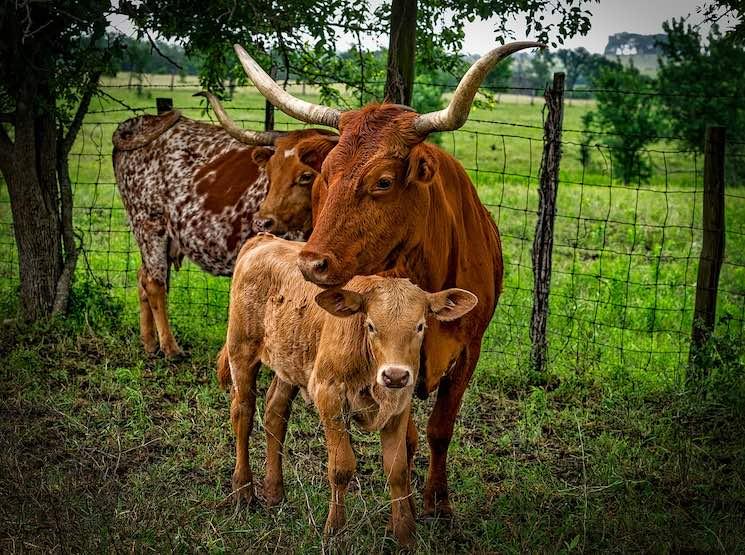 La familia Briscoe es propietaria de ranchos y campos de petróleo a lo largo del estado de Texas.