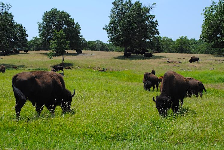 Los Drummonds son una familia prominente de la ganadería en el estado de Oklahoma.