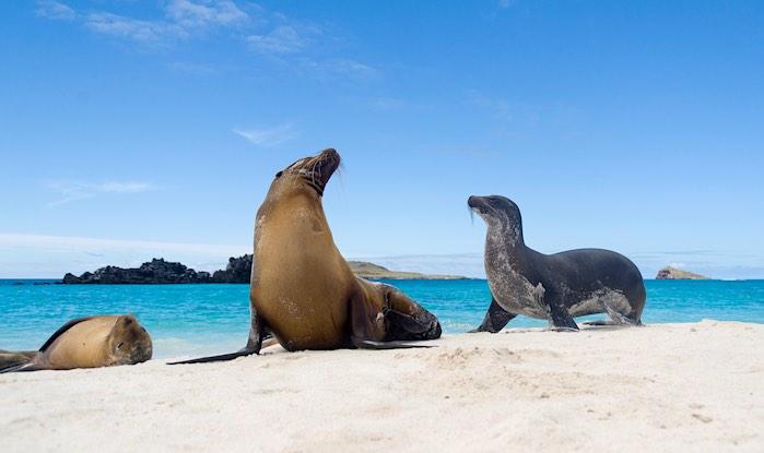 Laguna Azul en las Islas Galápagos: Uno d los 50 lugares más hermosos del mundo que debes visitar antes de morir.
