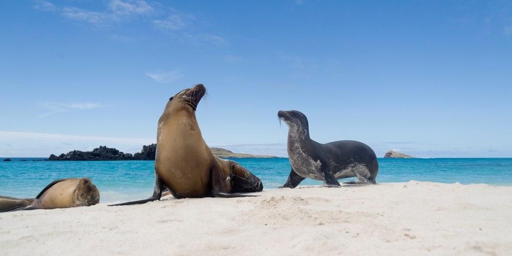 Las Islas Galápagos – Vea las tortugas gigantes y leones marinos.
