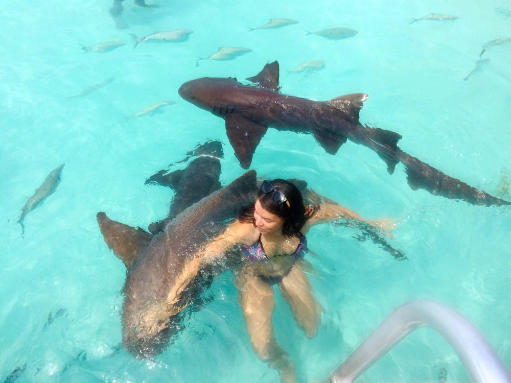 Viajar en yate a Exuma: Mujer nadando con tiburones nodriza en Compass Cay.